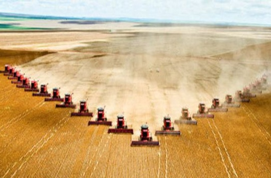Aerial view of tractors harvesting